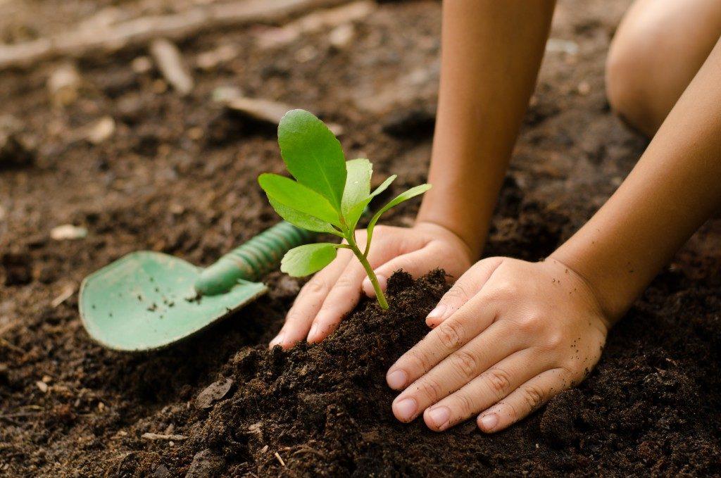 Planting on soil