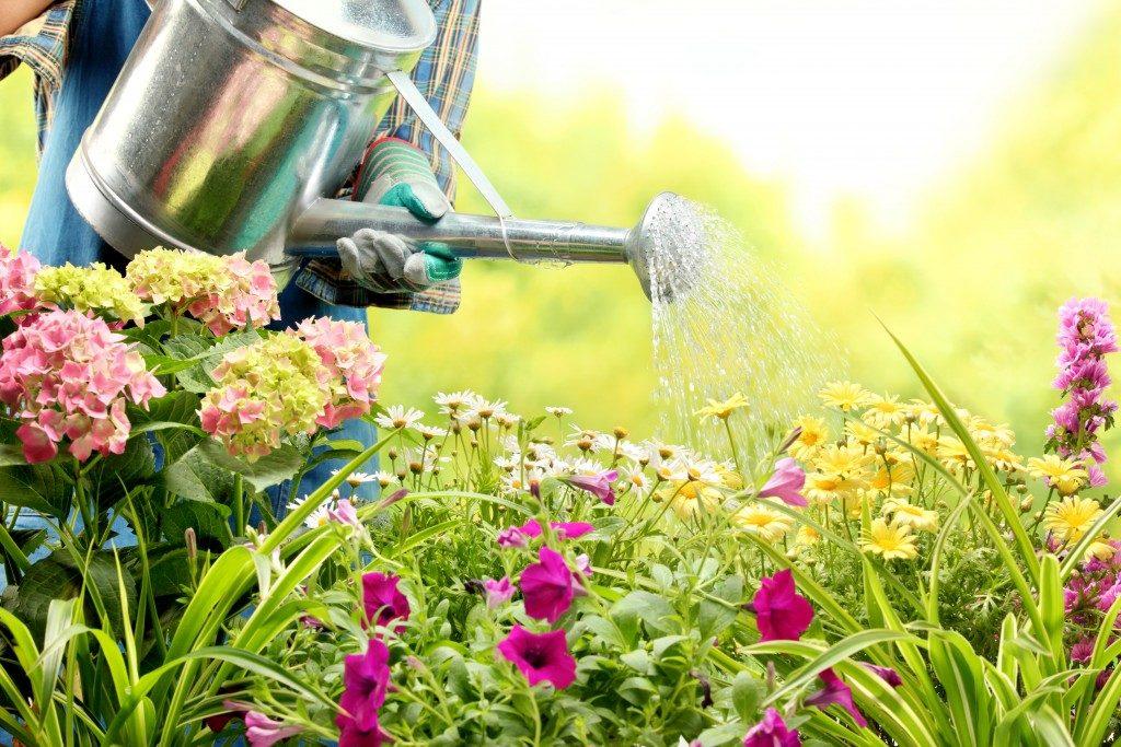 Man watering flowers