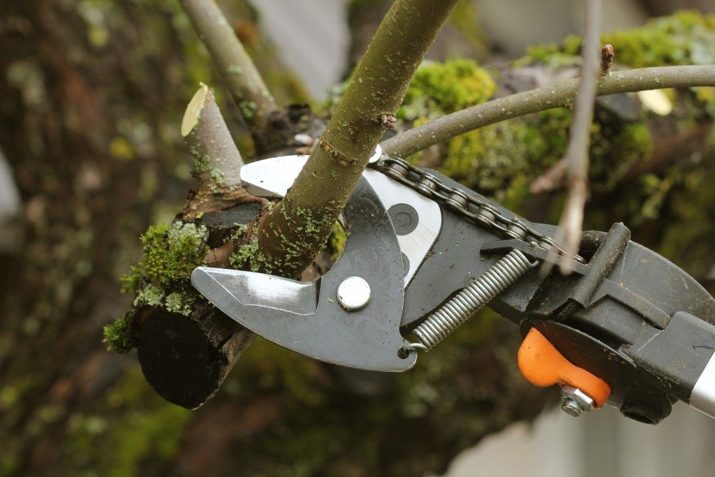 Pruning an old tree