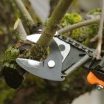 Underscoring the Importance of Proper Pruning for Tree Health