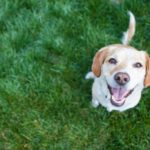 Three Essential Commands to Teach Your Dog