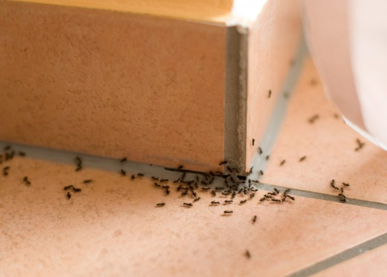 Pest Control: The Signs You Need to Call Experts Now