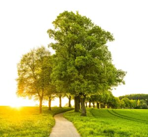 Three Incredible Facts You Probably Don't Know about Trees